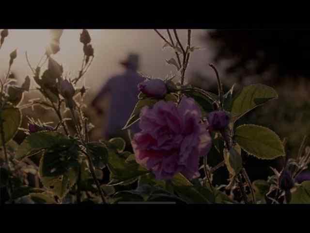 Esta Flor